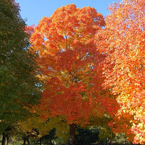 Deciduous-Trees-Web-1